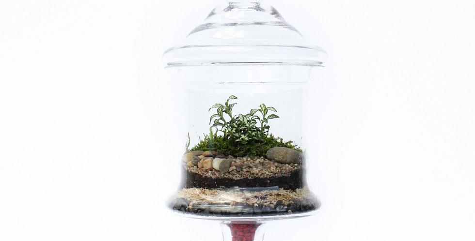 wenderplant terrarium, terrarium sydney, sydney terrarium, plant gift, indoor plant, candy jar terrarium