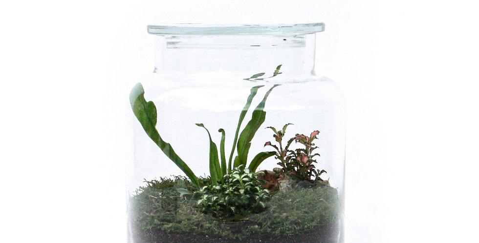 wenderplant terrarium, terrarium sydney, sydney terrarium, plant gift, indoor plant