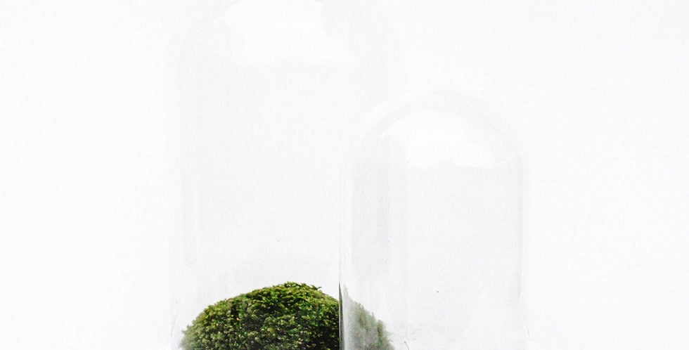 wender plant moss terrarium