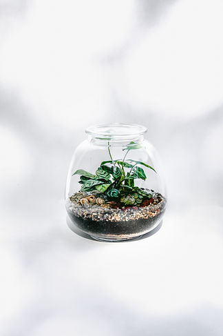 WENDER PLANT ROUND BOWL TERRARIUM.jpg