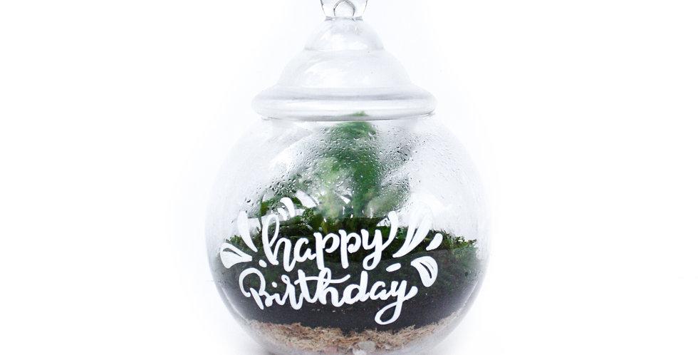 wenderplant terrarium, happy birthday terrarium, sydney terrarium