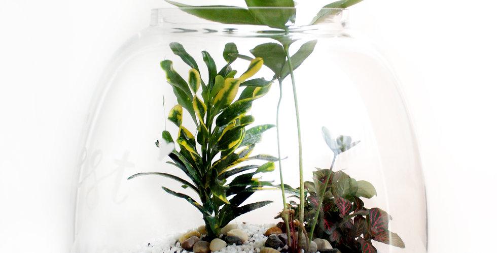 Round Glass Bowl Terrarium