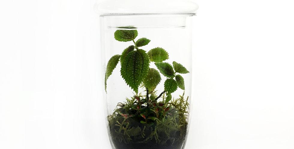 Long Chalice Shape Jar Terrarium