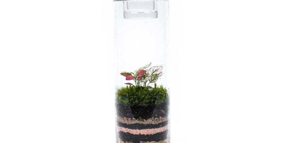 wenderplant terrarium, terrarium sydney, sydney terrarium, plant gift, indoor plant, tealight holder