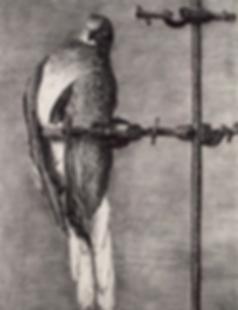 William Kentridge, Bird Catcher, Lithograph, kunst, art, kunstgalerij, art gallery, galerie d'art, kunstgalerie, paintings, prints and multiples, exhibition, tentoonstelling, art investment, art advisory, for sale