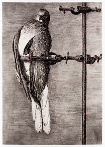 William Kentridge, Bird Catcher