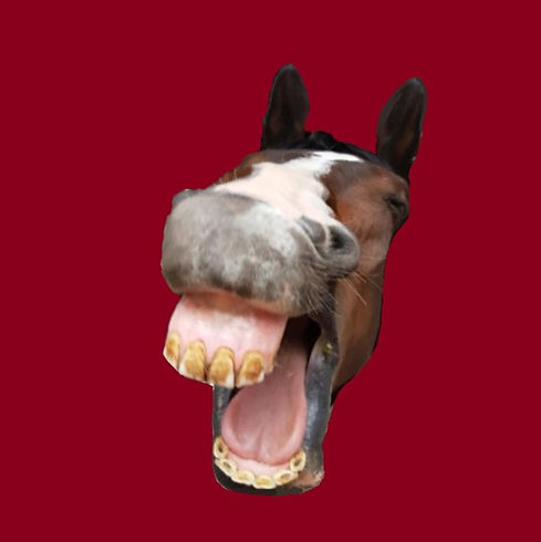 pferd.jpg