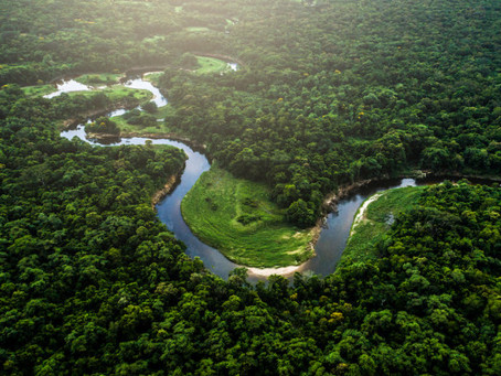 20% of Earth's oxygen is produced by the Amazon rainforest