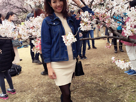 Catching Cherry Blossoms in Japan