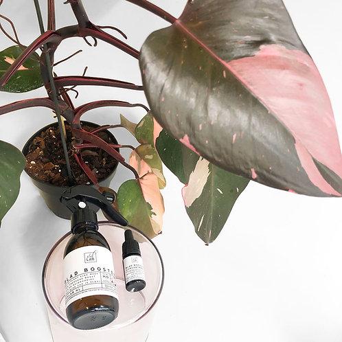 Blad Booster - 125ml sprayfles met concentraat voor 30 weken