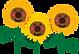 flower_sunflower.png