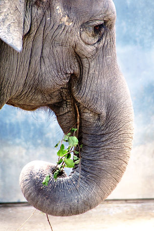 elephant-181062.jpg