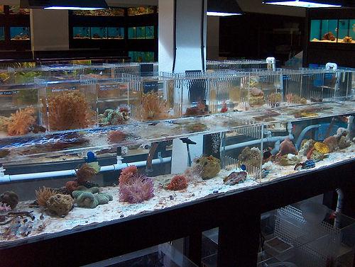 AquariumOdyssey 010.jpg