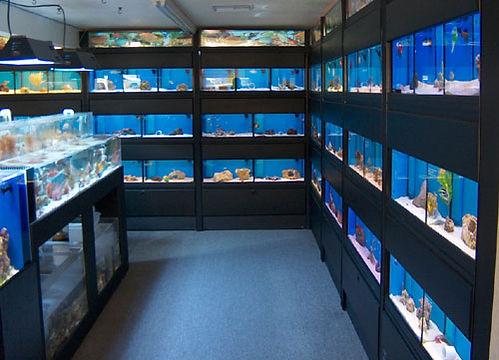 AquariumOdyssey-SW.jpg