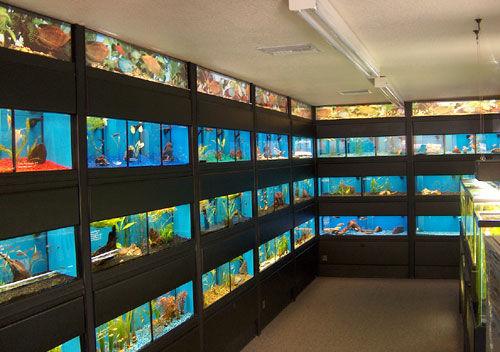 AquariumOdysseyFW.jpg