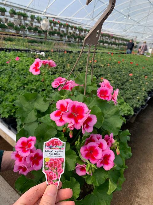 Calliope Large Rose MegaSplash
