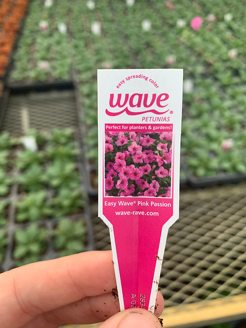 Easy Wave Pink Passion