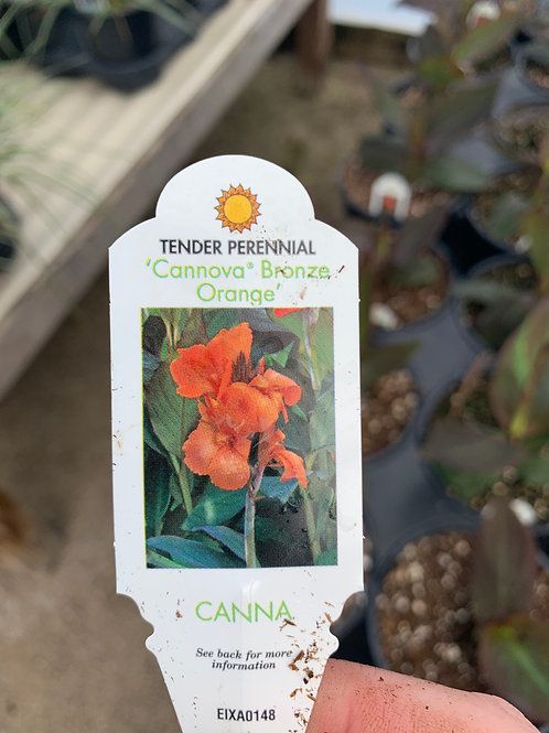 Cannova Bronze Orange Canna