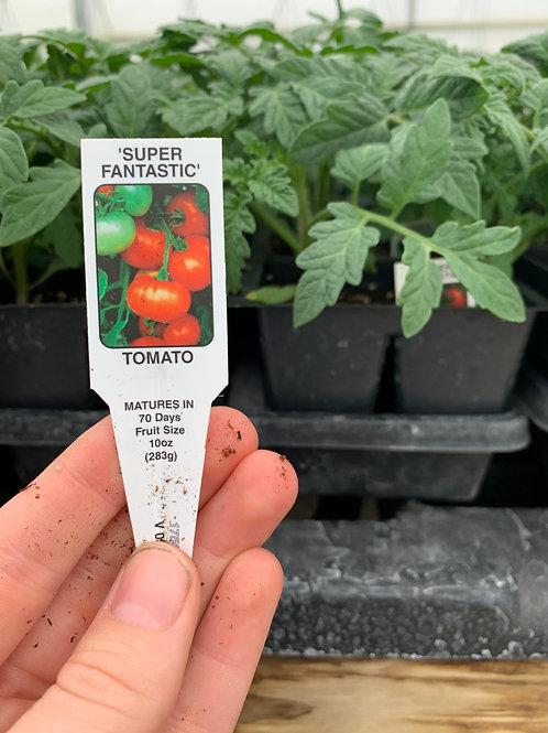 Super Fantastic Tomatoes