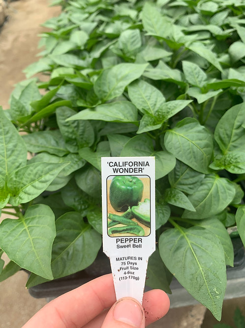 California Wonder Sweet Bell Pepper