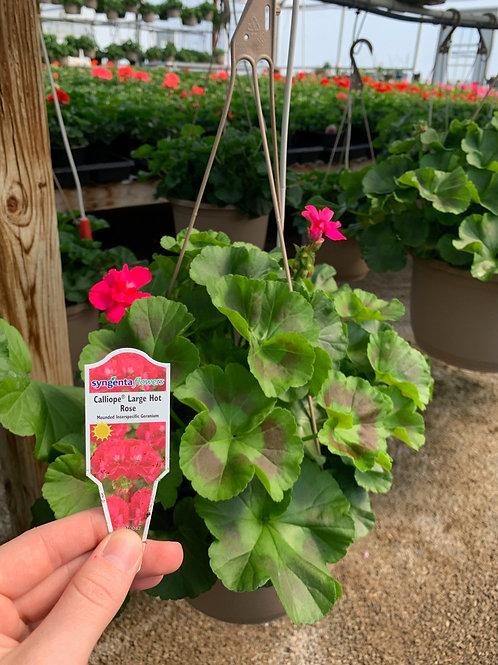 Calliope Large Hot Rose
