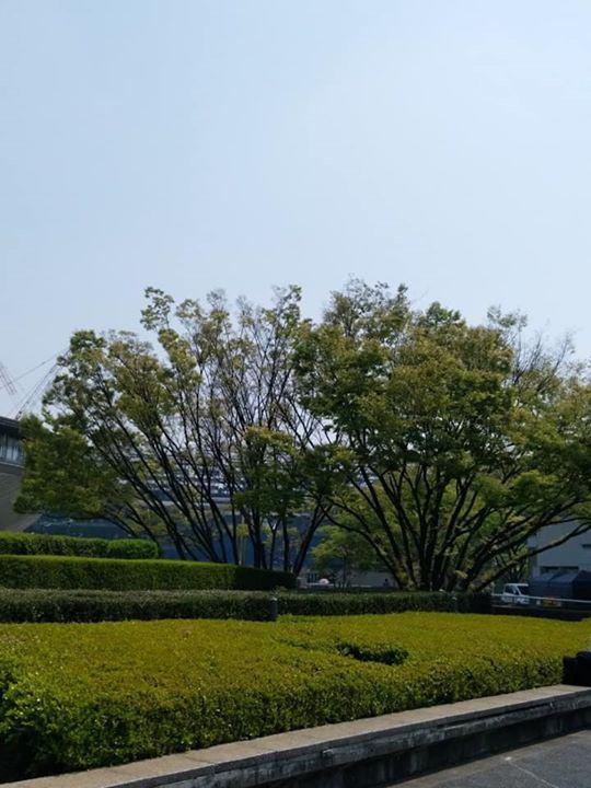 東京体育館横緑いっぱい 煌めく返り花プロジェクト