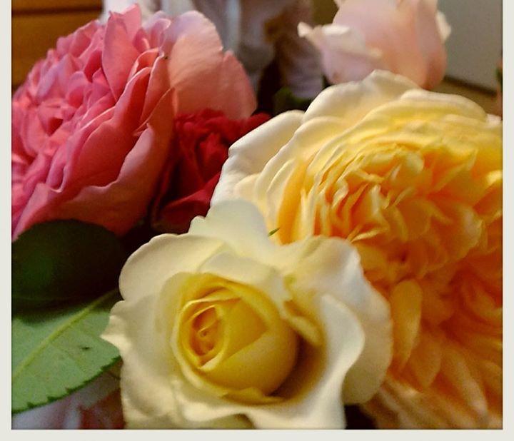ヒロコさん 丹精のバラ