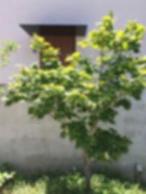 TSUGU DESIGN S MODEL HOUSE-1.JPG