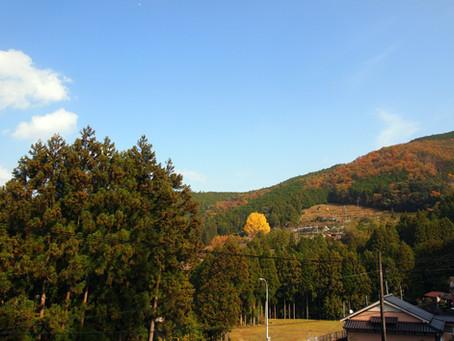 樹齢400年の千本銀杏