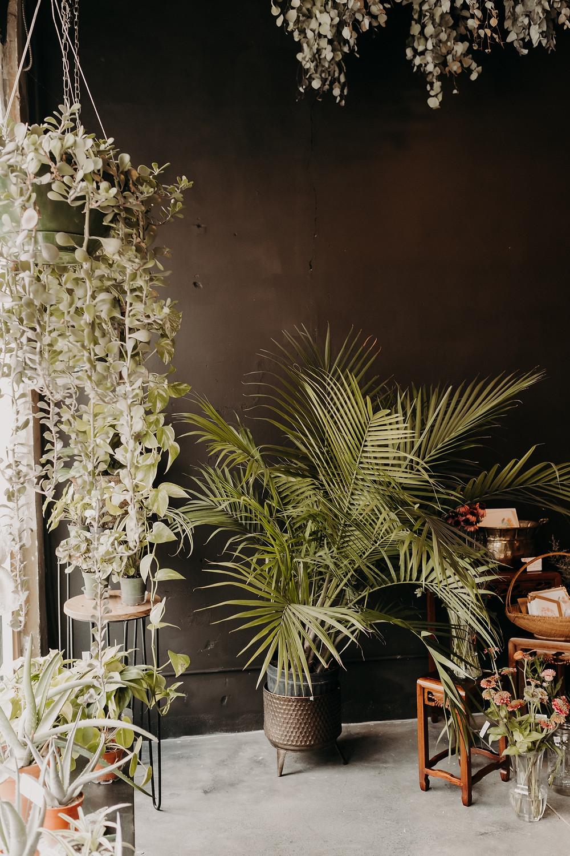 Plants in dark room flower shop wichita kansas indoor plant garden