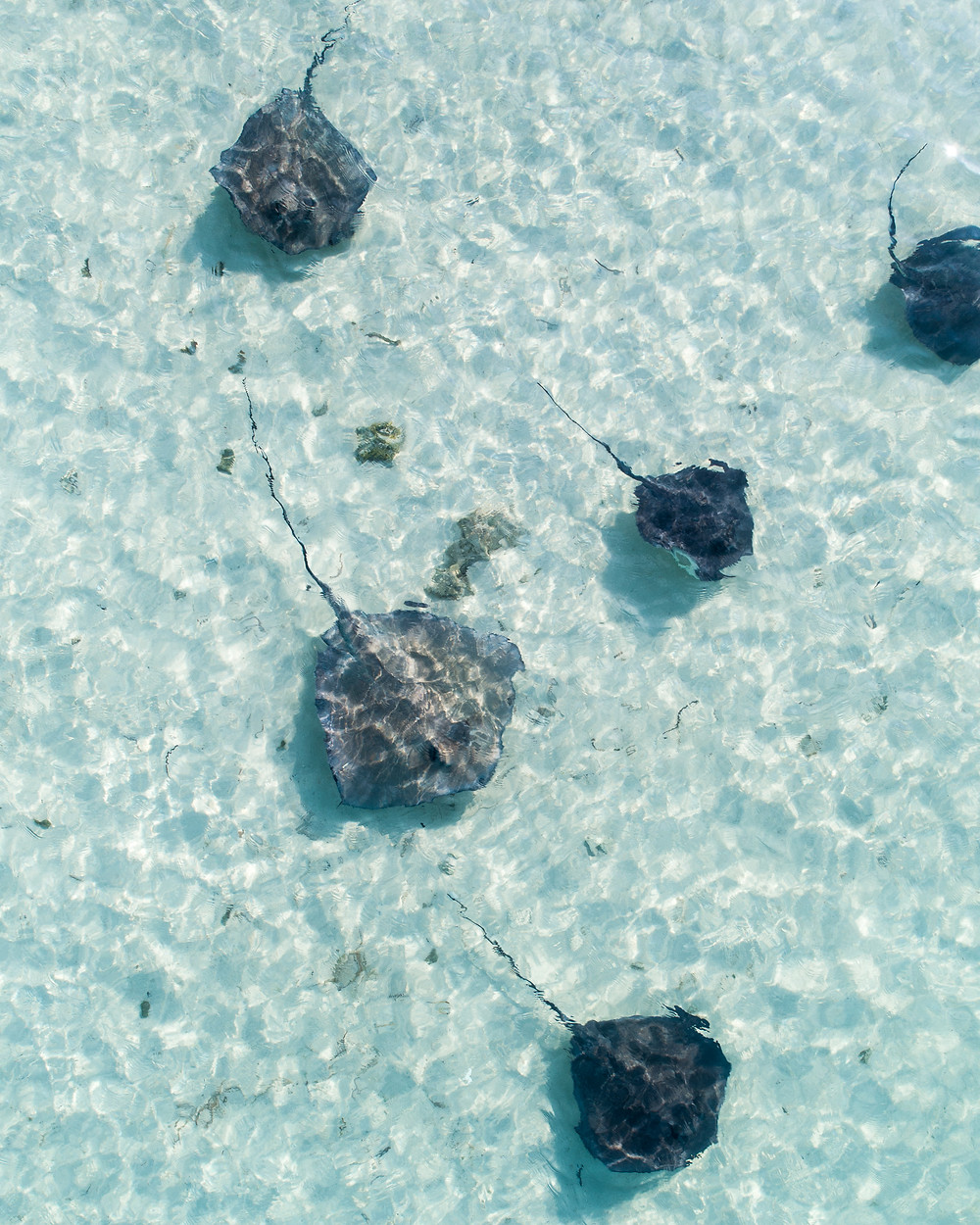 Stingrays picture taken from a drone in the bahamas by pierce gainey
