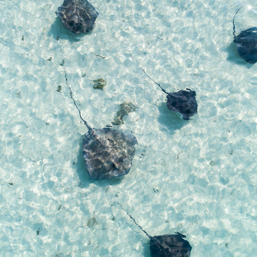 Stingrays from a drone