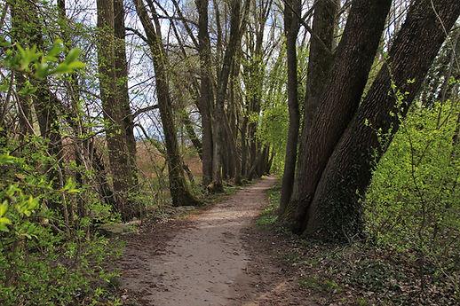 the-path-4101224_1920.jpg