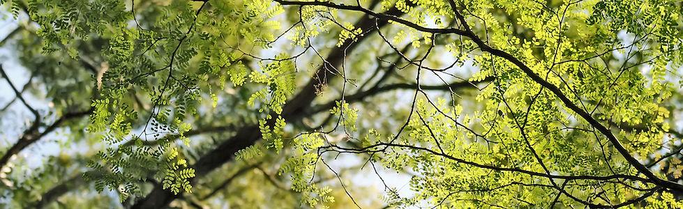 nature-trees_00378298.jpg
