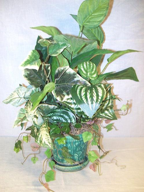 Mix of green plants!