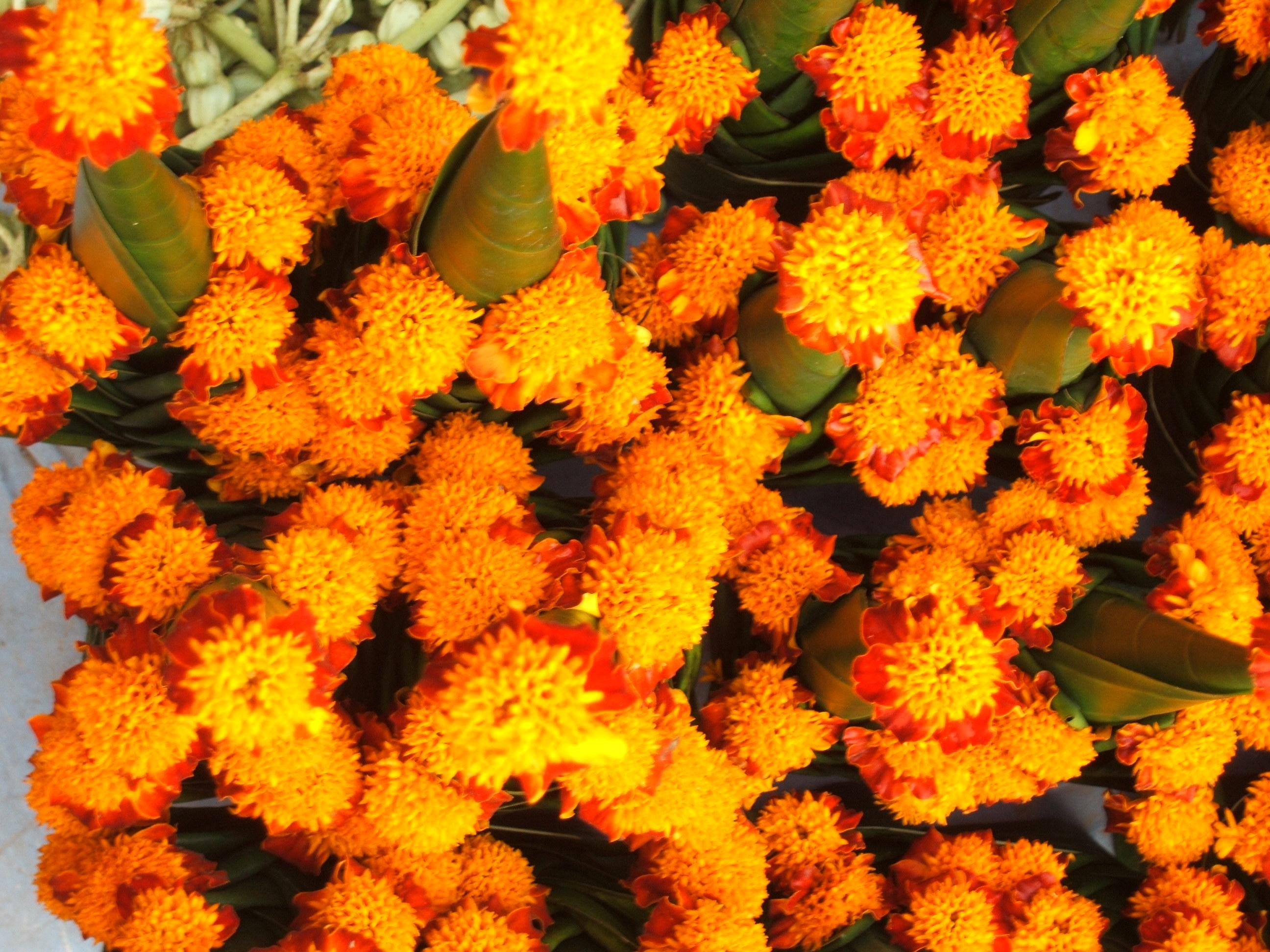 ronvisserfotografie- bloemen vietnam