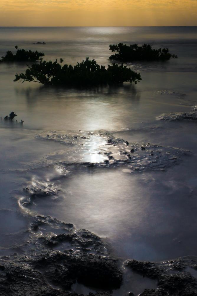ron visser fotografie-zeeplanten