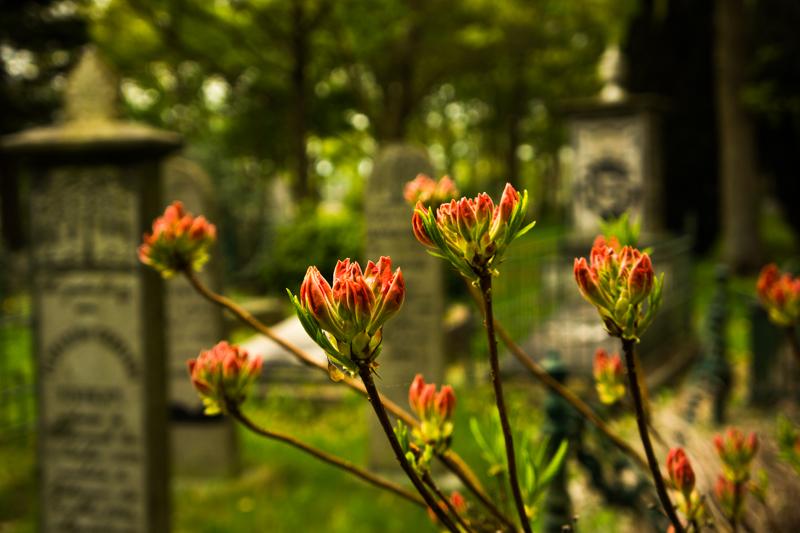 ron visser fotografie-begraafplaats6