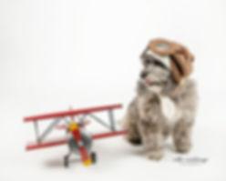 CC-dogandplane.jpg