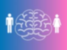 Мозг мужчины и женщины.png