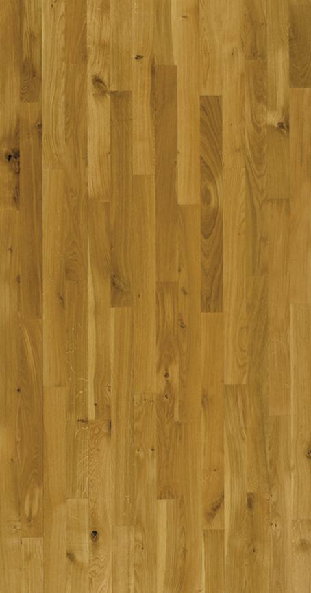 Oak - Harmony.jpg