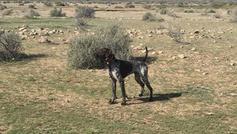 Airee & Ace puppy 11 mo AZ