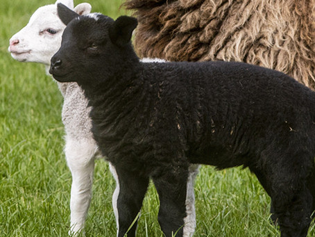 Samedi saint: La prière de l'agneau