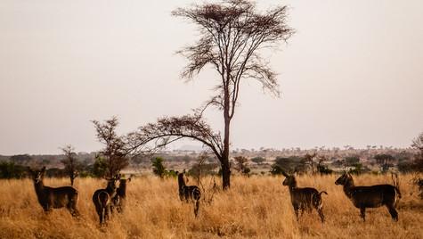 Samburu National Reserve, Kenya