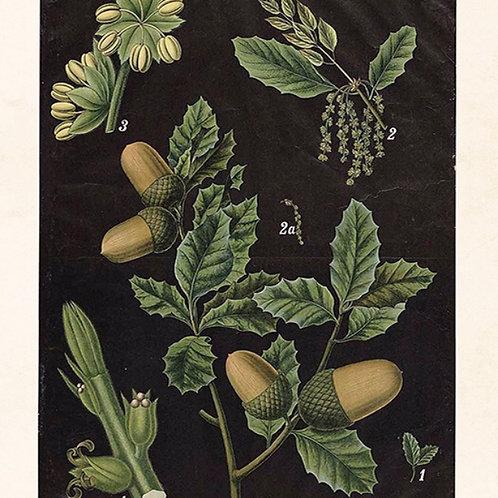 Poster, Ekollon, svart, 18x24cm
