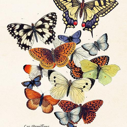 Poster, 18x24cm, Fjäril