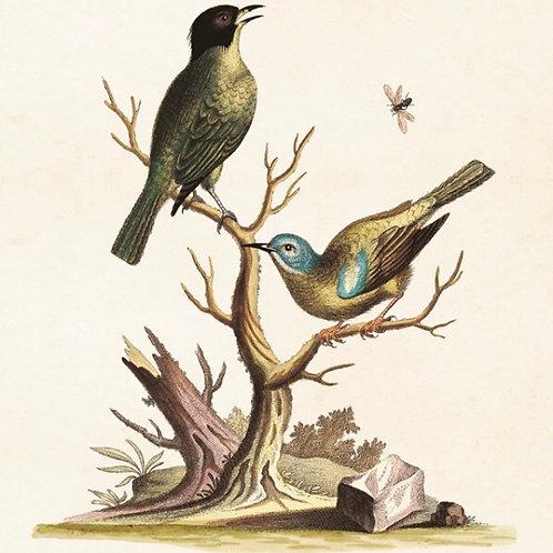 Poster, Fåglar, 18x24cm