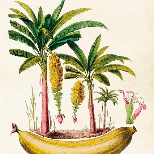 Poster, Bananträd, 50x70cm från Sköna Ting
