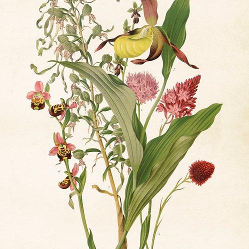Poster, 50x70cm, Orkidé/Bukett