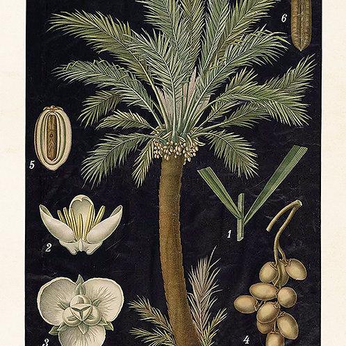 Poster, 18x24 cm, Palm